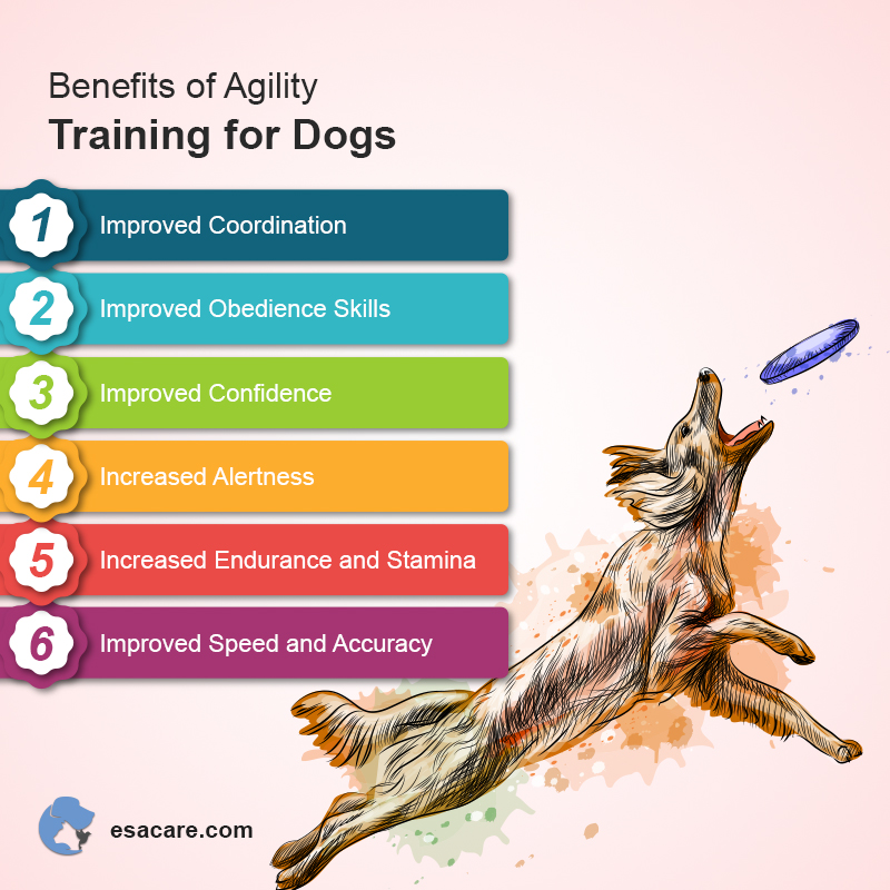 Agility Training