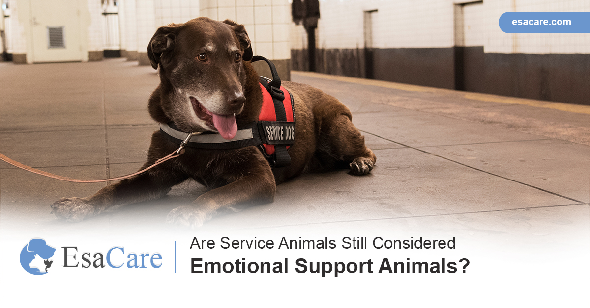 are emotional support animals service animals