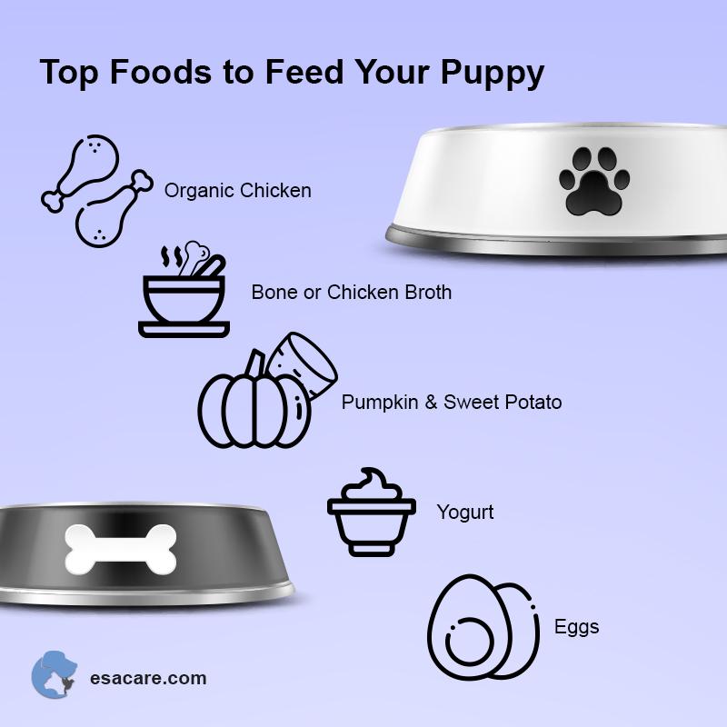 Puppy Foods