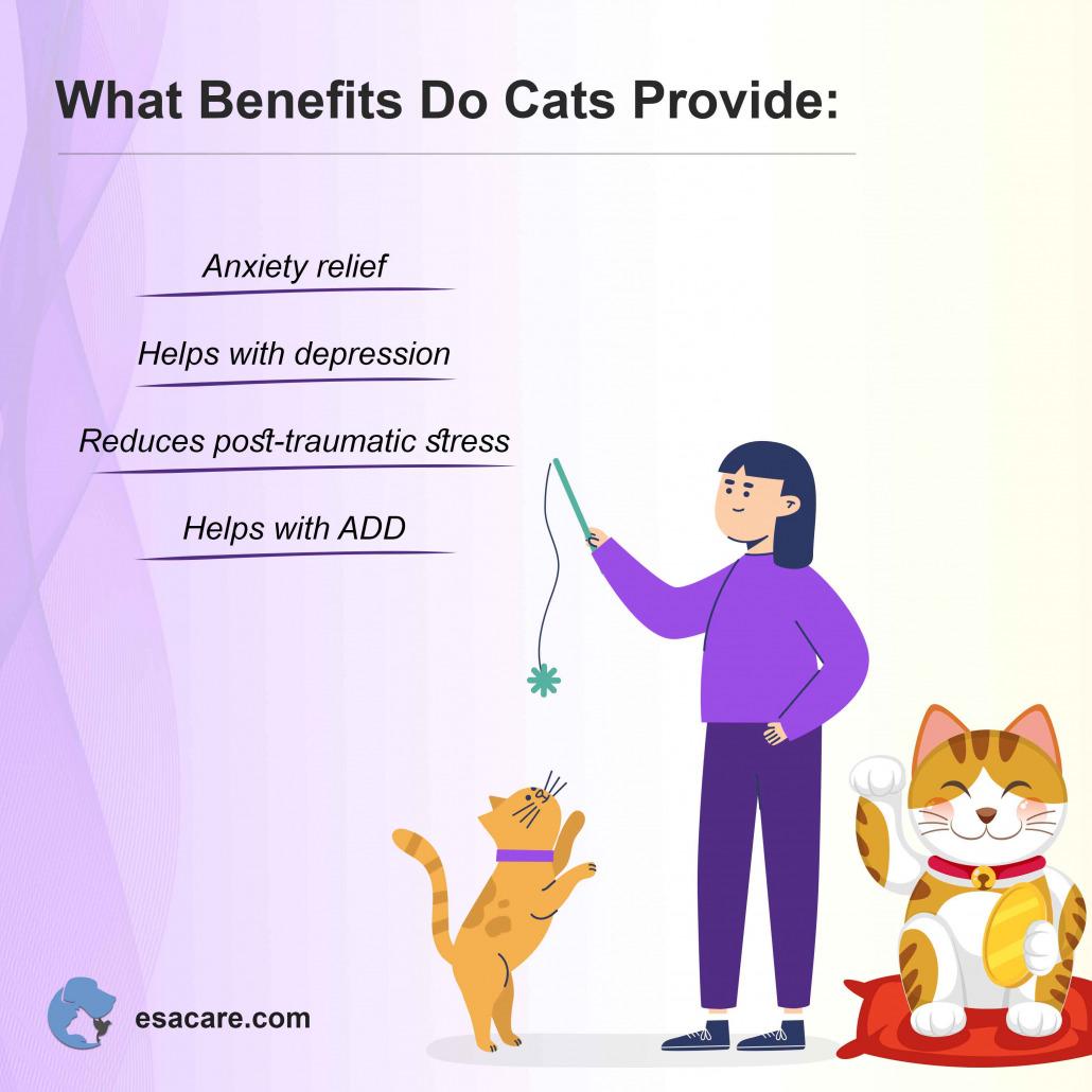 Benefits Do Cats