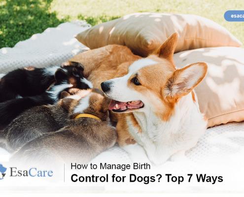 Dogs Birth Control