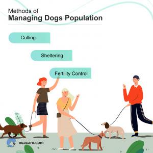 Managing Dogs Population