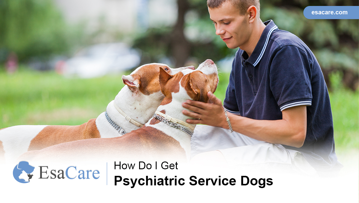 Psychiatric Service Dogs