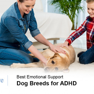 Emotional Support Dog for ADHD