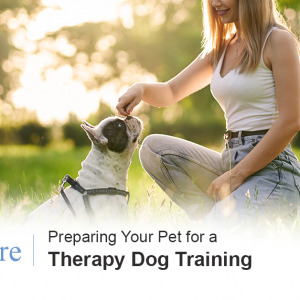 Therapy Dog Training