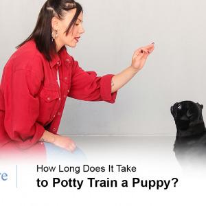 Potty Train a Dog