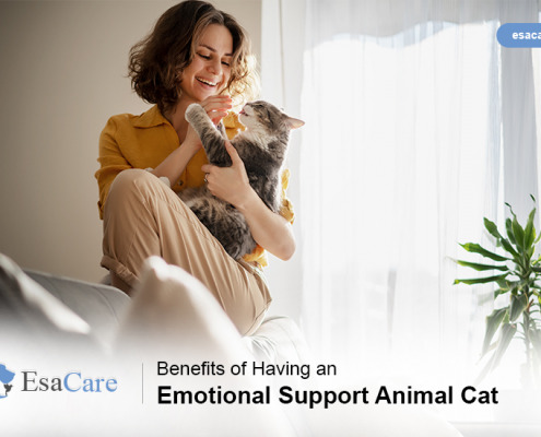 Emotional Support Cat