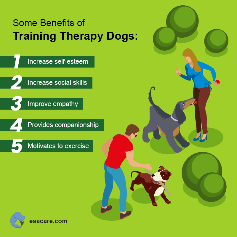 Training Therapy Dogs